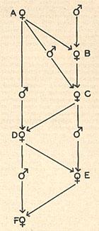 usda-inbredhybrid-2